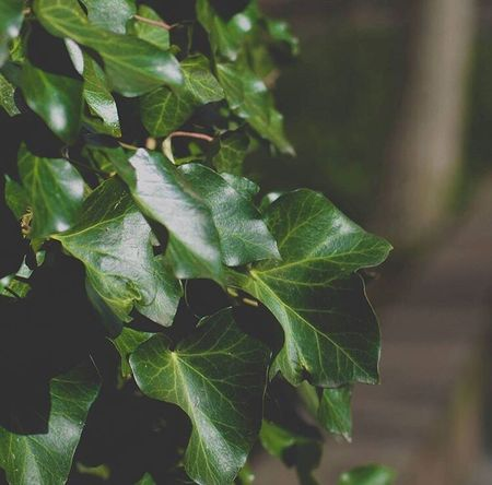 Leaf Growth Plant Green Color Nature No People Outdoors Freshness Close-up