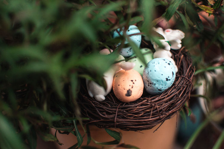 Close-up of eggs in nest