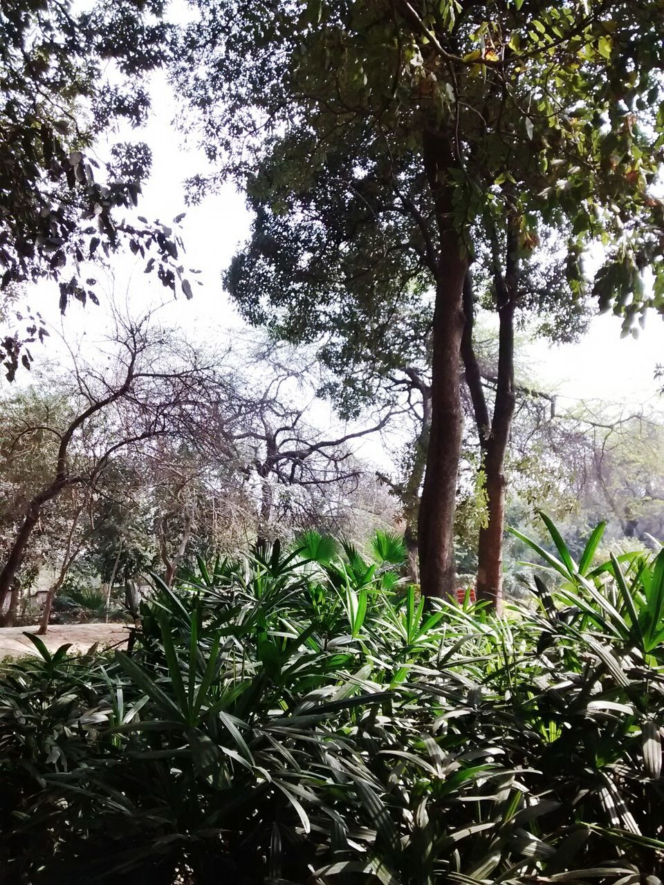 tree, growth, nature, green color, beauty in nature, branch, day, plant, outdoors, leaf, tranquility, no people, tranquil scene, scenics, tree trunk, grass, sky, freshness