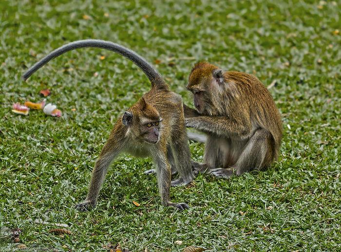 Monkeys in a row