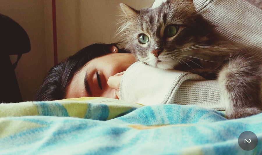 My Cat & I taking a Nap. Enjoying Life & Hanging Out. Traveling Home For The Holidays Pet Portraits