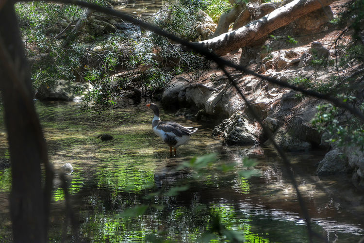 Animal Animal Themes Animal Wildlife Animals In The Wild Bird Day Forest Lake Nature No People One Animal Outdoors Tree Water