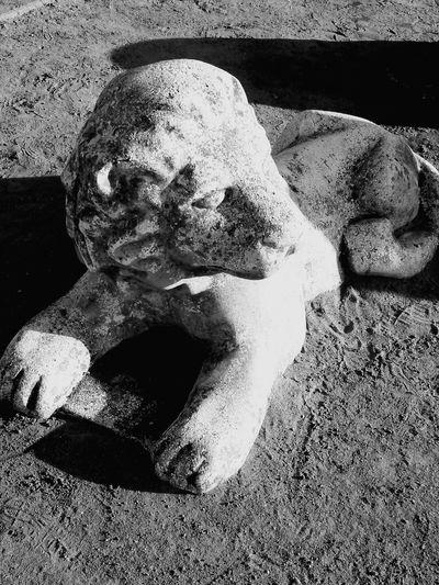 park lion