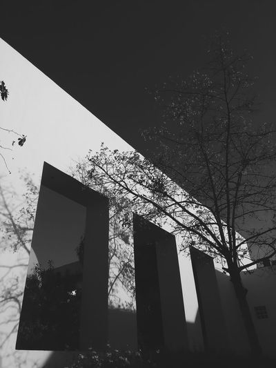 Here Belongs To Me Shadow Vscoartist Shadows & Lights Shadows On The Wall Shadow Play Tree White Black Black And White Urban Spring Fever