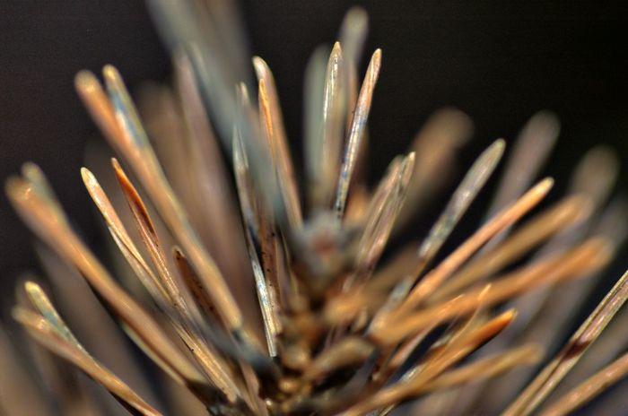 DSC_6548 Autumn Close-up Day Dried EyeEm Best Edits EyeEm Best Shots EyeEm Best Shots - Nature EyeEm Gallery EyeEm Nature Lover No People