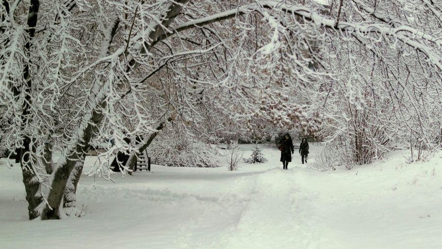 Просто наш двор. Streetphotography Siberia Snow ❄ Street Trees Novosibirsk это еще осень Autumn
