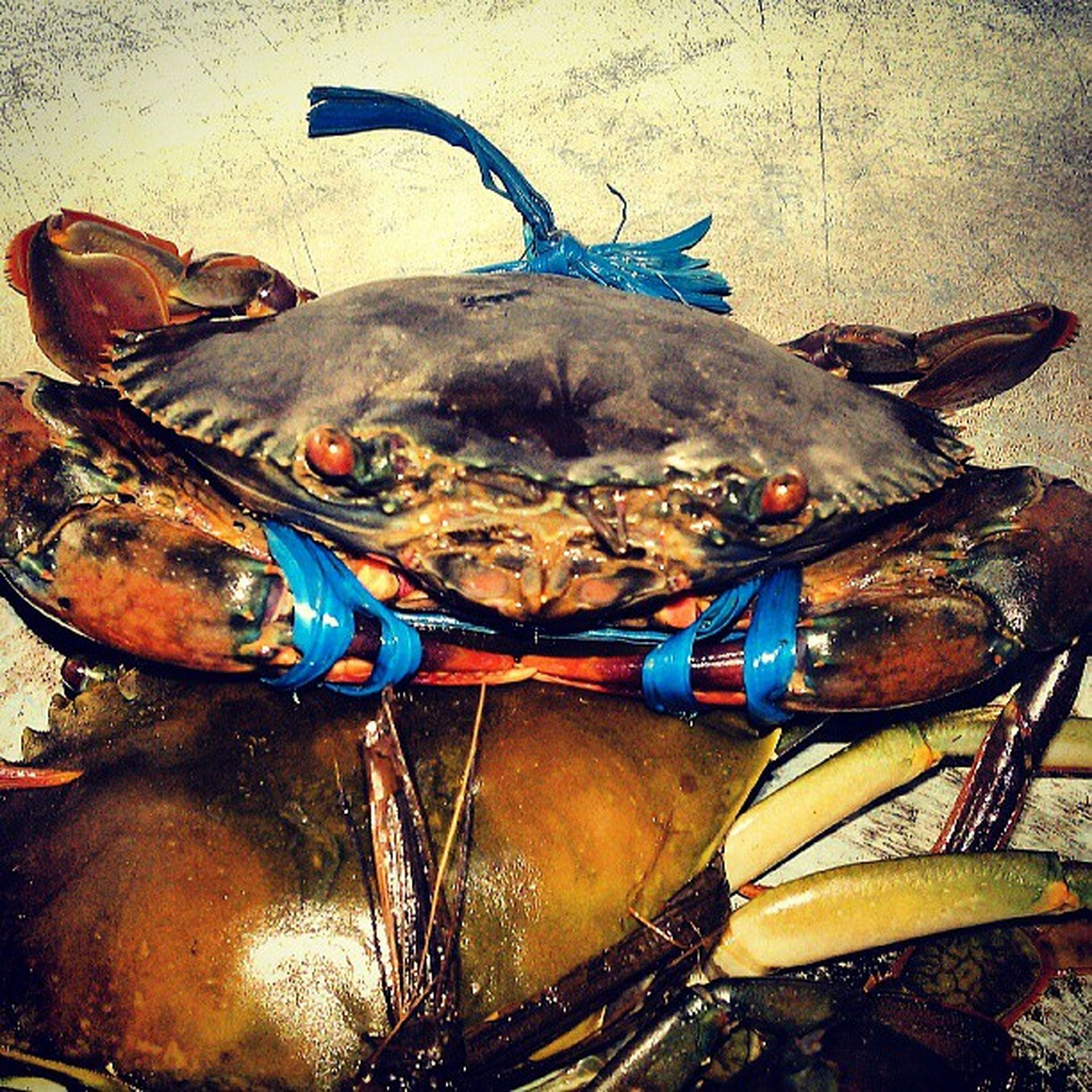 animal themes, fish, one animal, animals in the wild, wildlife, seafood, food and drink, high angle view, food, dead animal, indoors, water, no people, day, two animals, close-up, crab, animals in captivity, sea life