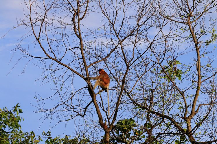 alone Nature Nature Photography Forest Wildlife EyeEm Best Shots Animal Animals In The Wild Wildlife & Nature Blue Sky Cloud - Sky EyeEm Selects Nature_collection Proboscis Bird Tree Branch Sky Animal Themes Close-up