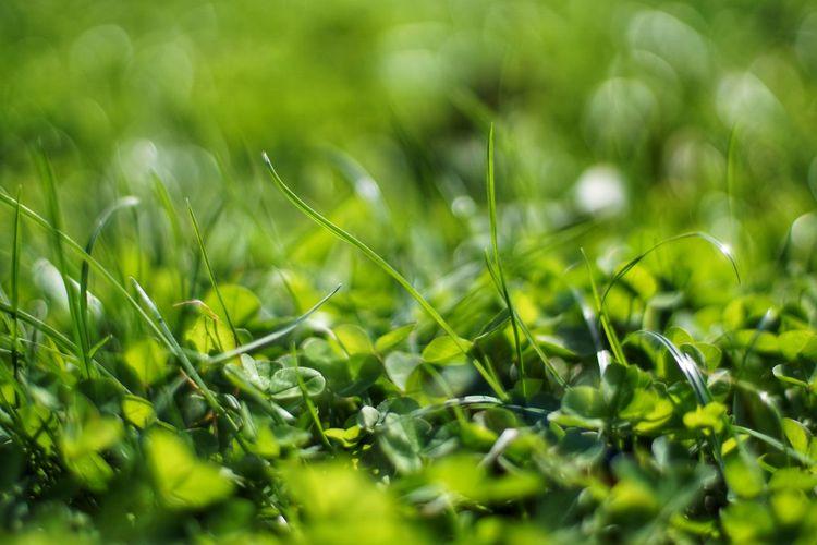 Green lover