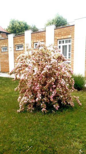 Just a bush :D
