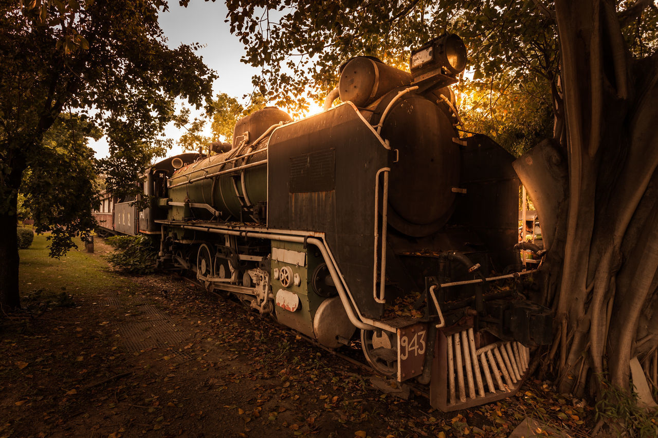 transportation, tree, mode of transport, train - vehicle, sunlight, railroad track, rail transportation, steam train, outdoors, day, locomotive, no people, sky