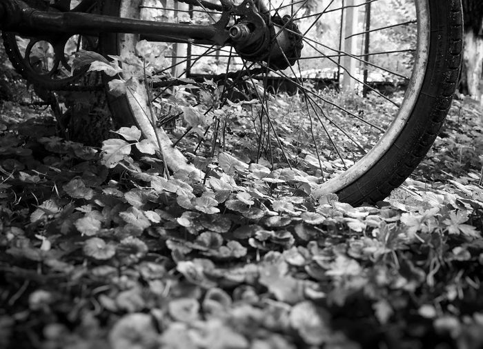 Wheel Bicycle Mode Of Transport Land Vehicle Tire Day Outdoors No People Close-up Black And White Photography Shadow Real Life Light And Shadow Blackandwhite