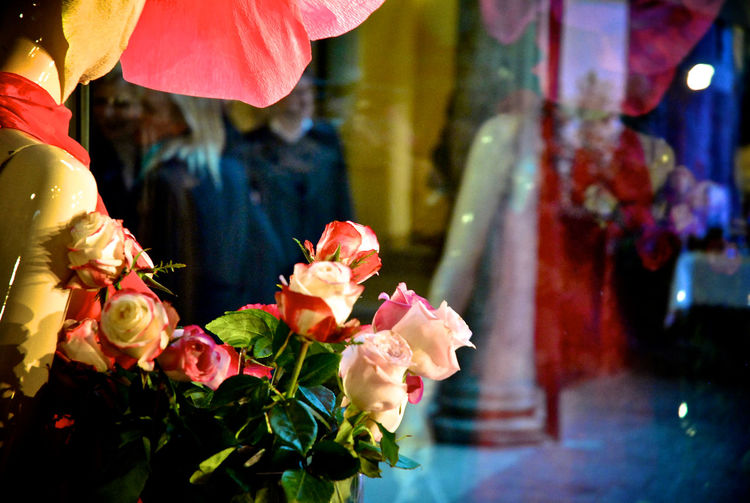 Watching out of the store Beauty In Nature Blooming Close-up Day Flower Flower Head Focus On Foreground Fragility Freshness Nature Outdoors Petal Pink Color Real People Store Window