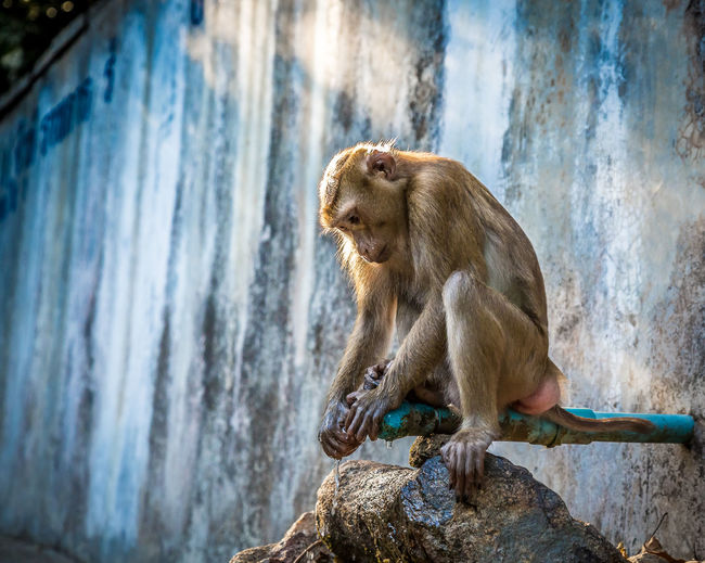 Close-Up Of Monkey Sitting On Faucet
