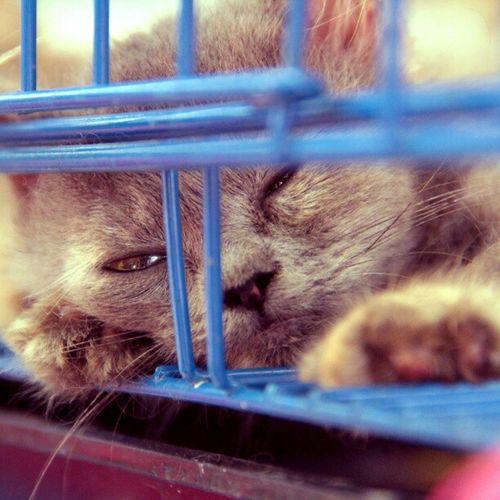 Masih ngantuuuk , hoaaaaam Selamat pagi Instanimal Instanusantara Instamorning Instamalang Instagram Instadroid Instadaily Instanusantaramalang IGDaily Igelinesia Photooftheday Animal Kucing Cat Malang Splendid