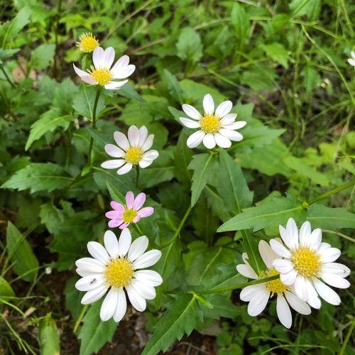 Miyakowasure Flowering Plant Flower Freshness Plant Vulnerability  Fragility Beauty In Nature