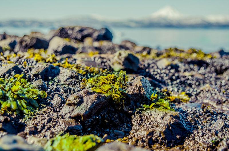 Bay shore Bay