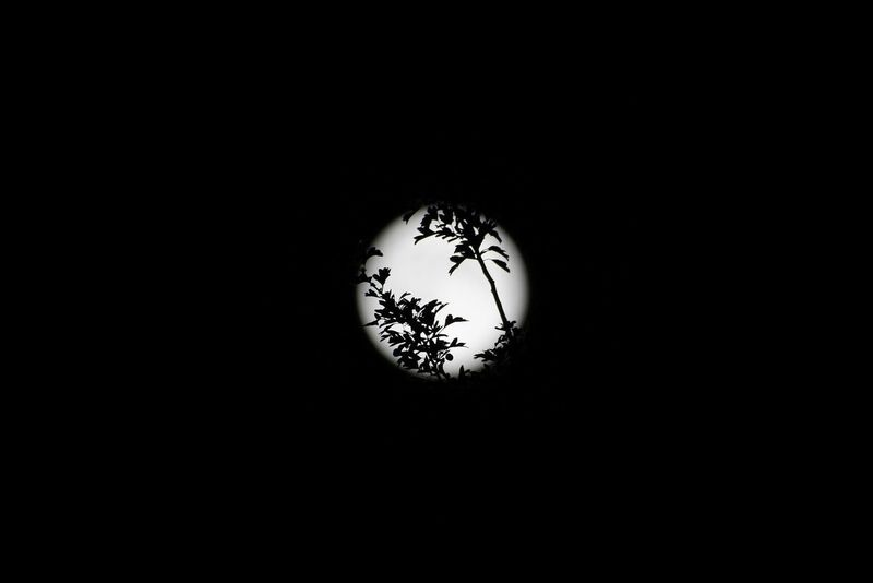 Moon Shots Moonphotography Moon Silhouette Leaves Tree Branches Moon Light Moon Art Moon_collection Learn & Shoot: After Dark