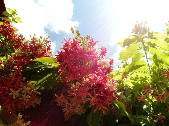 Sunny☀ Sunlight ☀ Walking Around The City  Morning Sky, Flowerporn , Flower Collection . Thailand_allshots .