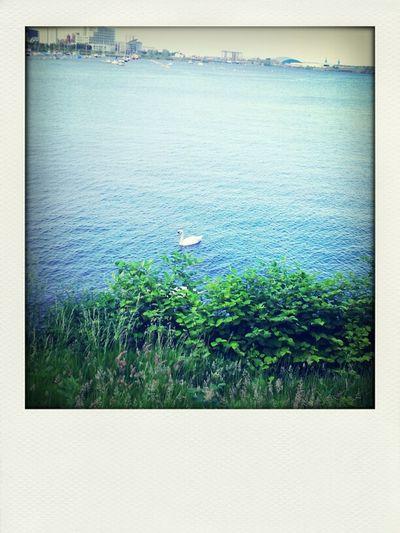 Swan lake.....lol
