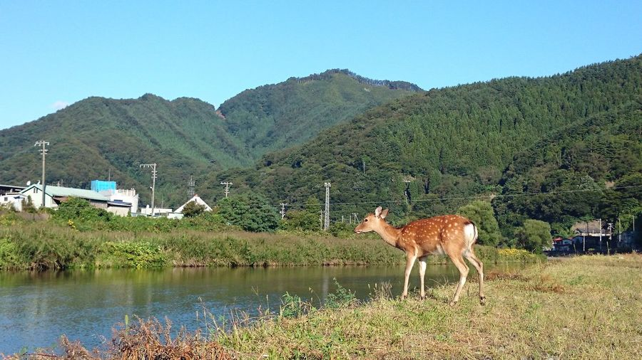 Mauntain Deer No People Animal Animal Photography Water Mountain Oil Pump Clear Sky Agriculture Animal Themes Sky Livestock Mountain Range