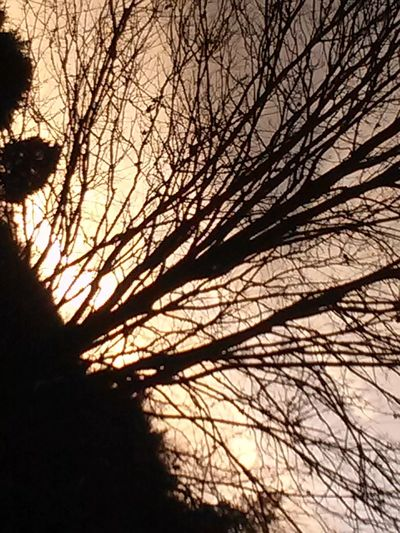 Silhouette of bare trees against sky at sunset