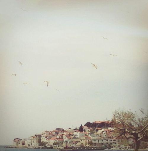 Taking Photos Relaxing Enjoying Life Dalmatia Primošten Galebovi Sky :)