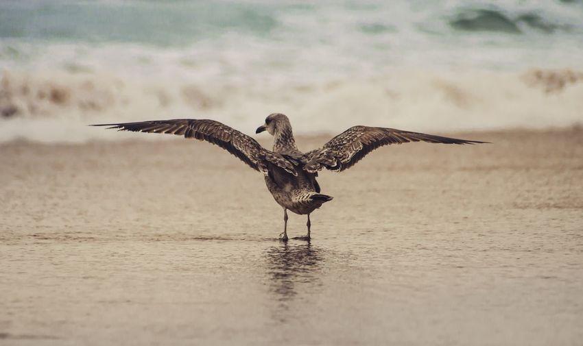 Bird flying over the sea