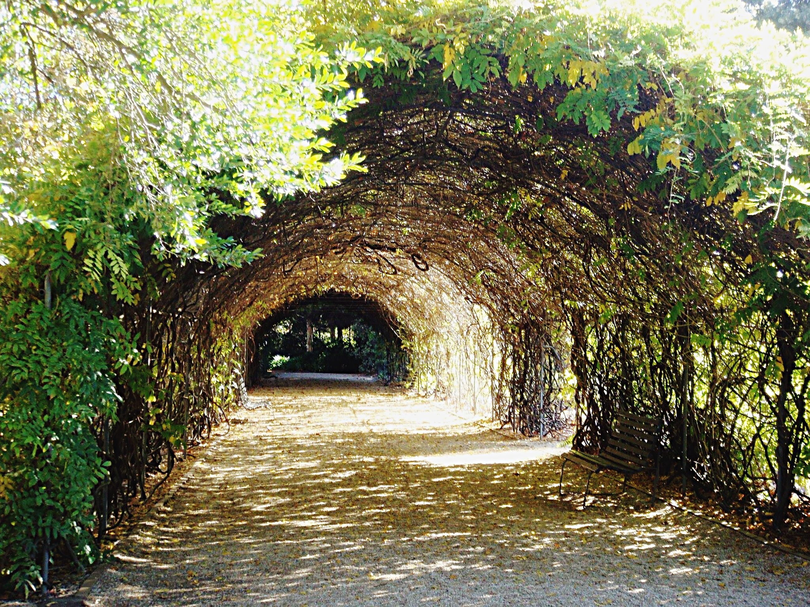 the way forward, arch, diminishing perspective, tree, vanishing point, tunnel, archway, footpath, built structure, nature, walkway, growth, pathway, narrow, tranquility, day, architecture, plant, green color, no people