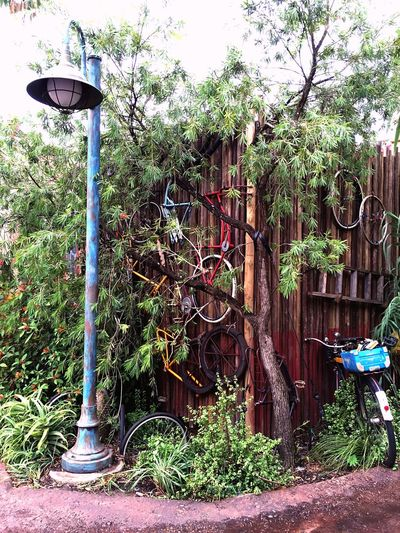 Bicycles Junk Old Streetphotography Traveling Street Light Transportation ShotOniPhone6 Summer ☀ Theme Park Nature Urban Nature Close Up Street Photography Urban Trees Urban Exploration Feel The Journey Color