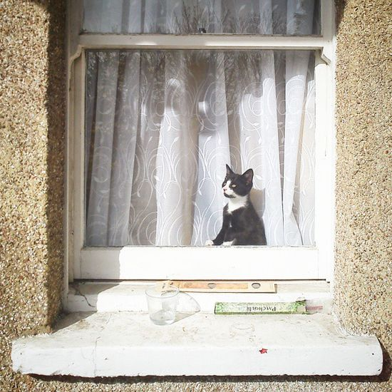 Cat Kitten Tuxedocat Windowsill Whereareyou Onthelookout Areyouhomeyet