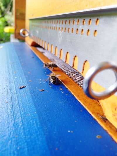 Bee Bees Myhobby Beekeeping
