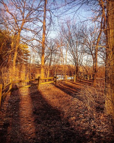 With the coming Spring this area of my walking trail will be filled with many colors, won't be long now. Beauty All Around Reflect Pause End Of Winter Rustic Trails Hiking Bare Tree Tree Tranquility Outdoors Autumn Nature No People Beauty In Nature Sky Day Branch Scenics Grass Tranquil Scene Landscape