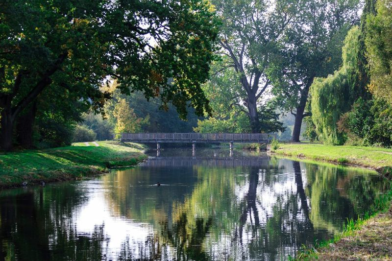 Brücke Fluss Tree Plant Water Reflection Nature Beauty In Nature Bridge Day Outdoors