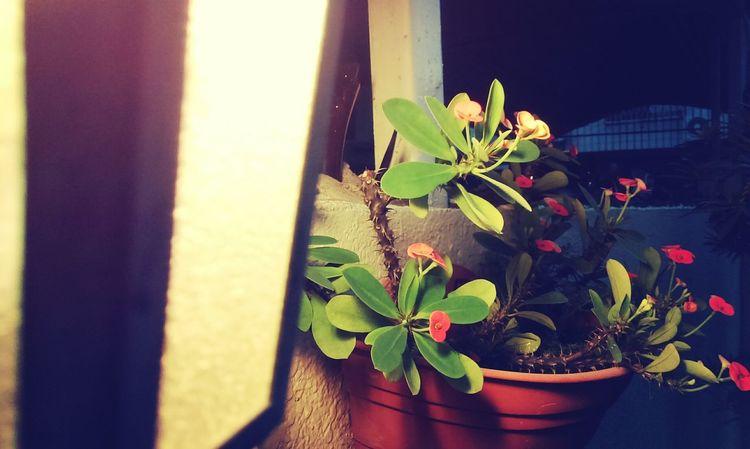 Flowers,Plants & Garden Flowers Lantern Enjoying Life