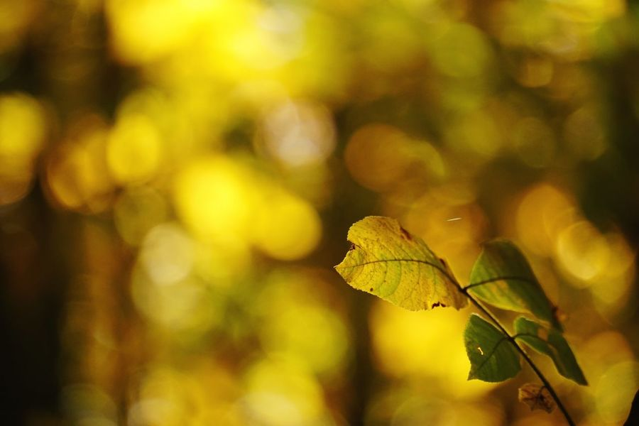 EyeEm Selects Leaf Autumn Nature Change Focus On Foreground Beauty In Nature Outdoors Day Close-up No People Growth
