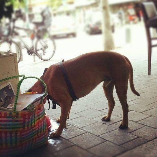 Tlv Ilovetlv Street Urban dog papers drink מישהו צמא... חמוד