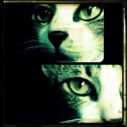 Daimond Eyes