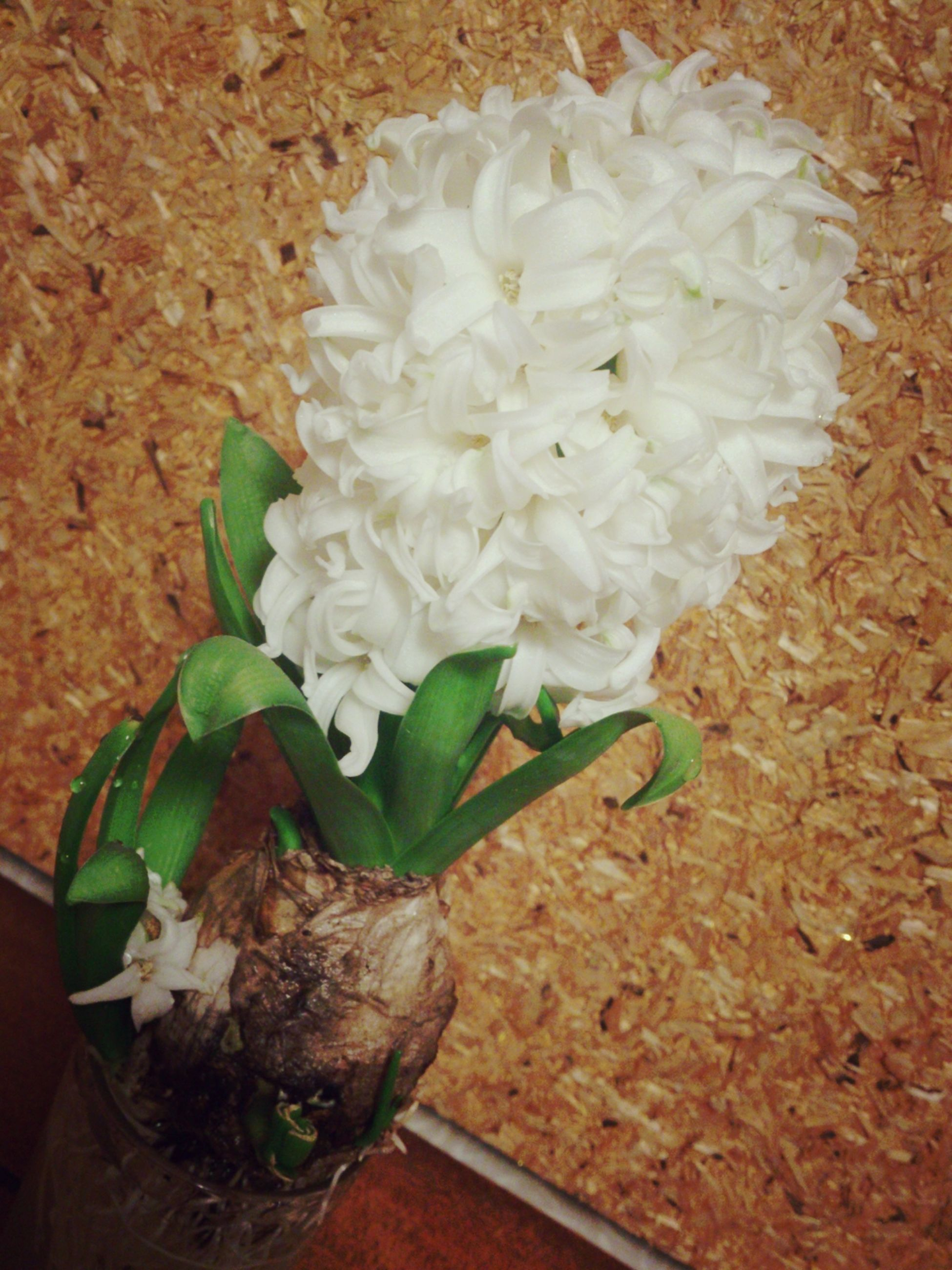 freshness, flower, indoors, high angle view, fragility, petal, growth, plant, food and drink, table, close-up, flower head, leaf, white color, beauty in nature, food, nature, still life, no people, directly above