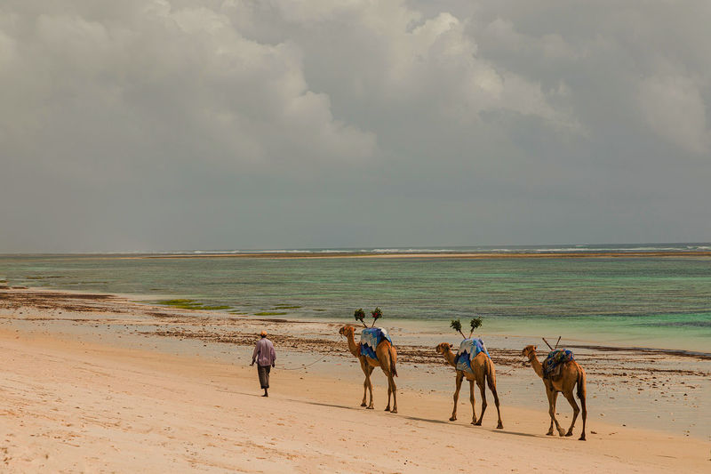 People riding horses on beach against sky