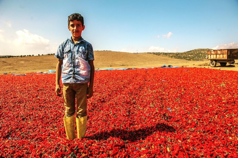 Portrait of boy standing amidst red chili peppers against sky