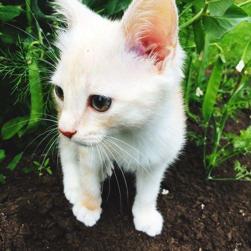 Мой котик, люблю его очень сильно😍🤗😘 Mycat