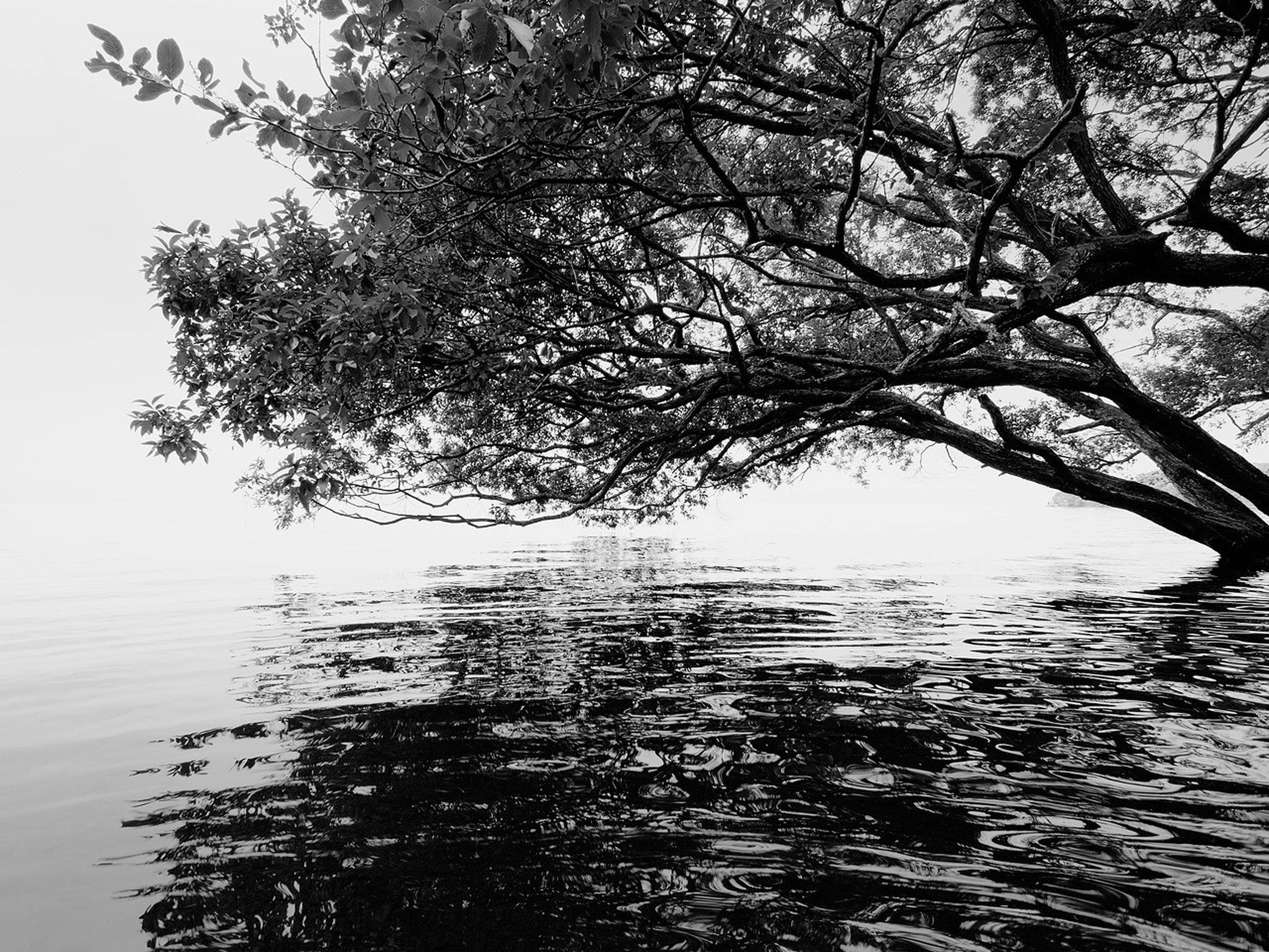 tree, water, tranquility, branch, tranquil scene, waterfront, nature, beauty in nature, scenics, lake, bare tree, reflection, sky, growth, clear sky, outdoors, rippled, no people, day, idyllic