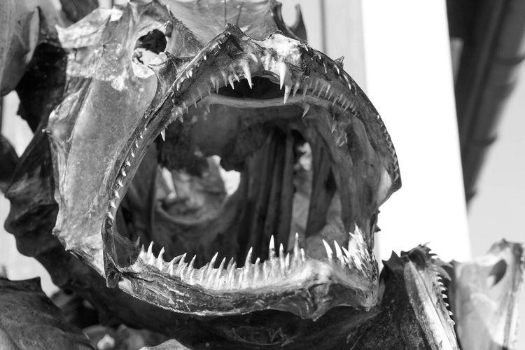 Close-up of fish skeleton