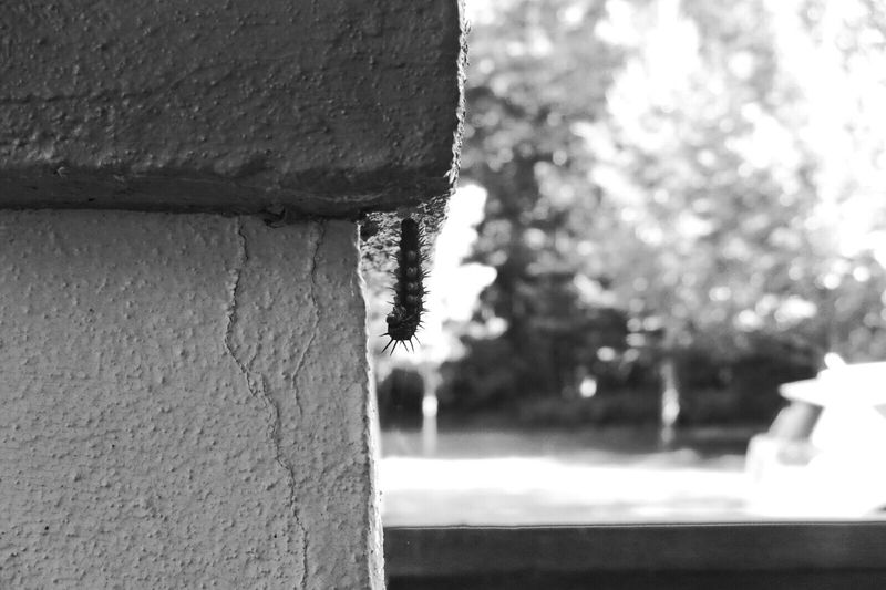 becoming... (2) Nature On Your Doorstep Check This Out Shades Of Grey Suburban Wildlife Black And White Suburbia Monochrome Silhouette