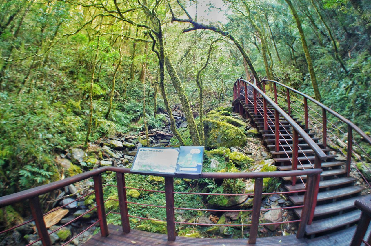 railing, tree, forest, steps and staircases, day, outdoors, no people, hand rail, nature