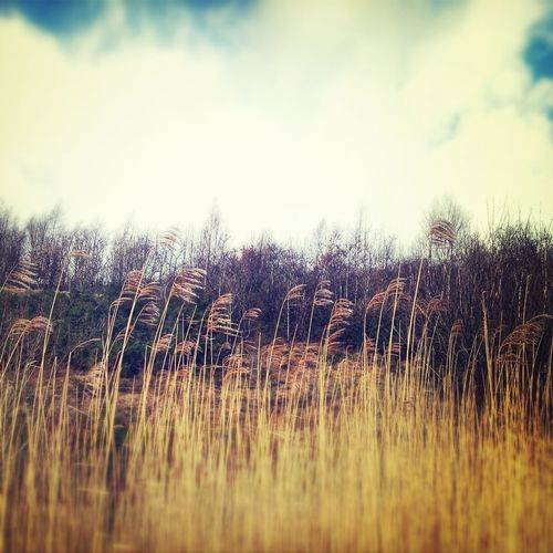 Grass Wild Reeds  Impossible Moments EyeEm Nature Lover