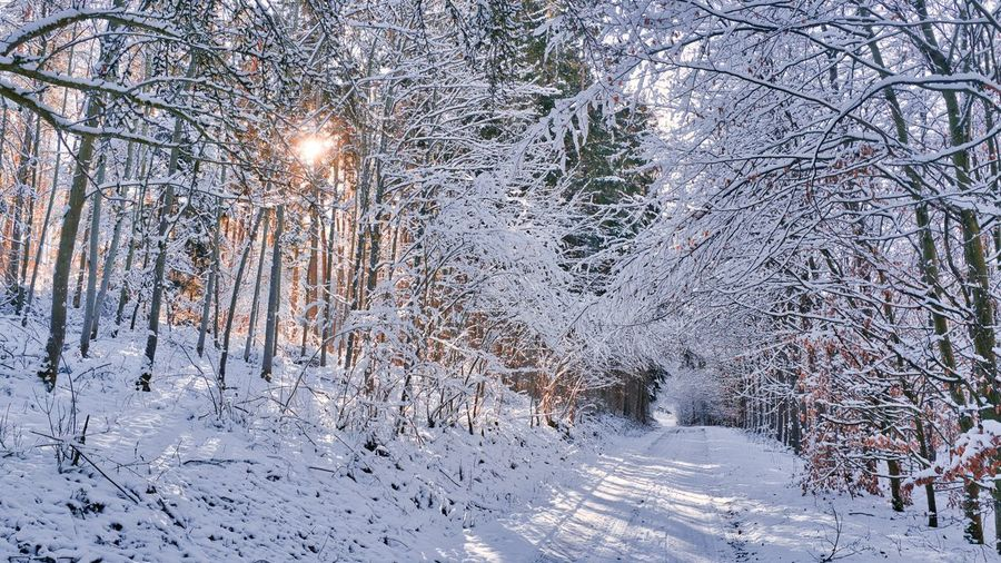 Snow covered bare trees in forest