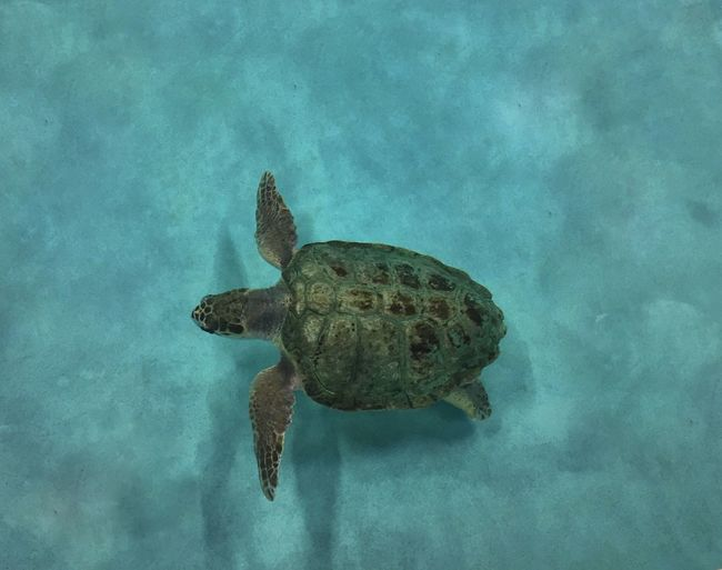 🐢🐢🐢 Water One Animal Animal Themes Reflection Blue Waterfront Day Nature Tranquility Standing Water No People Tuerle