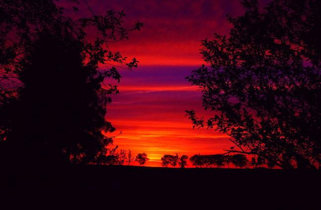 Toruń Sunset Beauty In Nature Fields Garden Nature No People Outdoors Poland Red Romantic Sky Sky Summer Sunset Tree